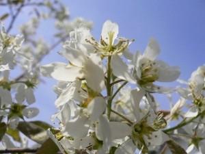 シンボルツリー花